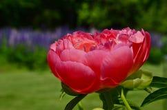 Зрелище весны Стоковое фото RF