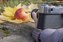 Зрелое красное яблоко лежа на слое зрелых листьев осени Стоковая Фотография RF