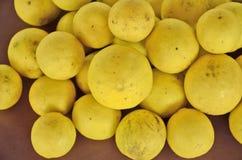 Зрелое собрание лимона Стоковая Фотография
