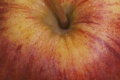 зрелое яблока красное Конец Яблока вверх Стоковые Изображения RF