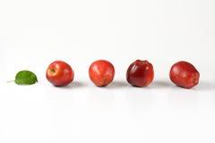 зрелое яблок красное Стоковое фото RF