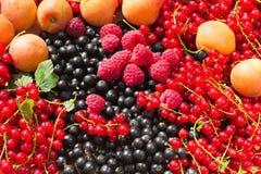 Зрелые абрикос, поленика, красный цвет и черная смородина Стоковое Изображение RF