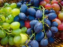 Зрелые виноградины Стоковая Фотография RF
