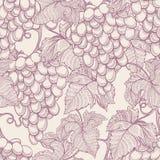 Зрелые виноградины Стоковое Изображение RF
