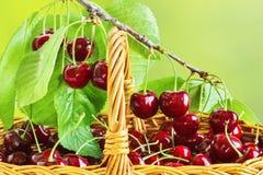 Зрелые вишни в корзине и на ветви Стоковые Изображения