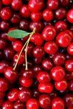Зрелые вишни с лист Стоковая Фотография