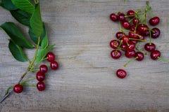 Зрелые вишни Стоковое фото RF