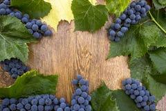 Зрелые голубые виноградины с зелеными листьями на деревянном крупном плане предпосылки Стоковые Изображения