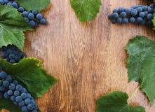 Зрелые голубые виноградины с зелеными листьями на деревянном крупном плане предпосылки Стоковая Фотография
