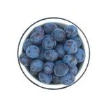 Зрелые голубые изолированные сливы в взгляд сверху bown Стоковые Фотографии RF