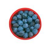 Зрелые голубые сливы в красном изолированном ведре Стоковые Изображения RF