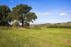 Зрелые деревья и поля заплатки Стоковая Фотография