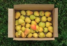 Зрелые желтые груши в картонной коробке на предпосылке зеленой травы Стоковое Изображение RF