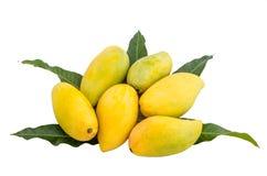 Зрелые мангоы Стоковая Фотография RF