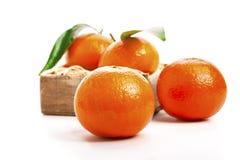 Зрелые мандарины, Tangerines с листьями Стоковое фото RF