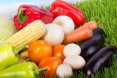 Зрелые овощи на зеленой траве Стоковое фото RF