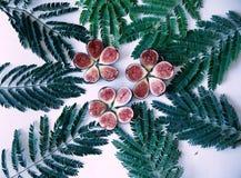 Зрелые половины смоквы Стоковые Фотографии RF