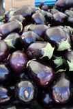 Зрелые плодоовощи баклажана Стоковое Изображение RF