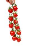 Зрелые свежие томаты вишни на ветви изолированной на белой предпосылке Стоковое Изображение