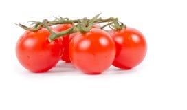 Зрелые свежие томаты вишни на ветви Стоковая Фотография