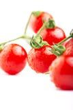 Зрелые томаты вишни на ветви на белой предпосылке Стоковые Изображения RF