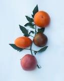 Зрелые томаты различных размеров и разнообразий Стоковые Фотографии RF