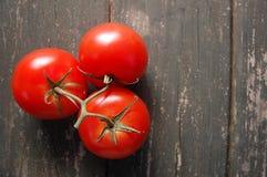 Зрелые томаты Стоковые Фото