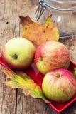 Зрелые душистые яблоки Стоковые Изображения