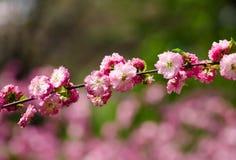 Зрелые цветки Стоковое Изображение
