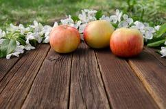 Зрелые яблоки и цветение яблока на деревянной предпосылке открытый космос Стоковые Фотографии RF