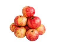 Зрелые яблоки красного цвета лета Стоковое Фото