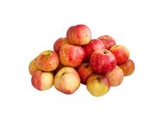 Зрелые яблоки красного цвета лета Стоковая Фотография RF