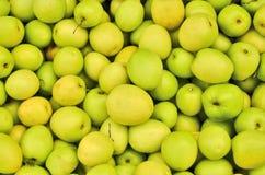Зрелые яблоки mankey Стоковые Изображения RF