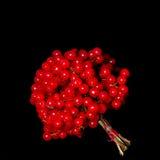 Зрелые ягоды калины Стоковое фото RF