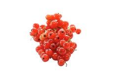 Зрелые ягоды красной смородины изолированные на белой предпосылке стоковые изображения rf