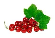 Зрелые ягоды красной смородины с зелеными листьями Стоковые Фото