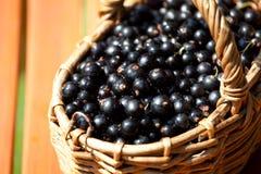 Зрелые ягоды черной смородины в корзине Стоковые Изображения
