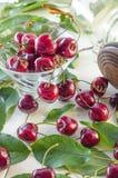 Зрелые maroon вишни в стеклянной вазе и опарнике Стоковые Изображения