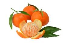 зрелые tangerines Стоковые Изображения