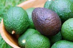 Зрелый авокадо Стоковые Фотографии RF