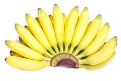 Зрелый желтый младенец бананов на белизне изолировал предпосылку с shado Стоковое Фото