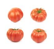 Зрелый красный изолированный томат говядины Стоковое Изображение RF