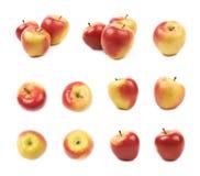 Зрелый красный и золотой комплект яблока jonagold Стоковые Изображения RF