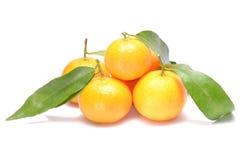 Зрелый мандарин с листьями Стоковое Фото
