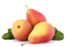 Зрелый плодоовощ груши Стоковые Фото