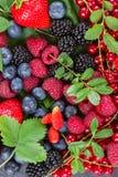 Зрелый свежих ягод стоковые фотографии rf