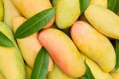 Зрелый стог манго с листьями Стоковые Изображения RF