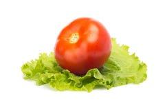 Зрелый томат на кровати салата стоковое изображение