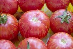 зрелый томат Стоковые Фотографии RF