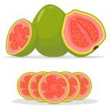 Зрелый guava красного цвета плодоовощ иллюстрация штока